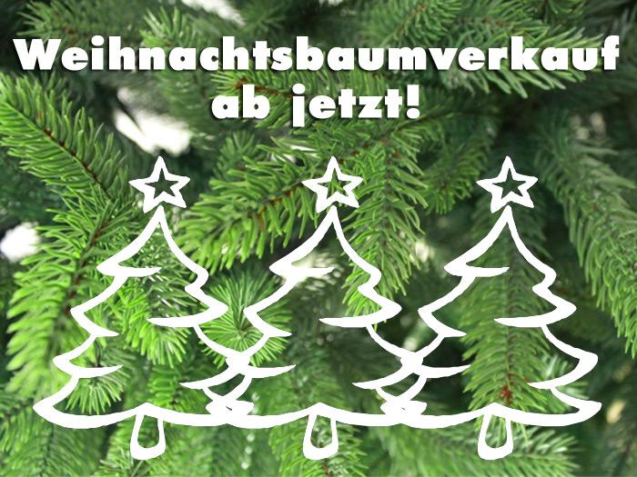 700_weihnachtsbaum-verkauf-bauspezi-milz-ruelzheim